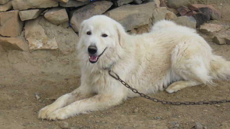 """Cane sequestrato in Trentino: """"Abbaia troppo"""""""