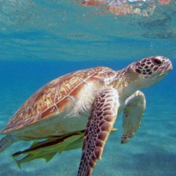 Clima, nel Mediterraneo a rischio la metà delle specie