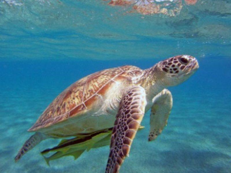 Metà delle specie del Mediterraneo sono a rischio per colpa del riscaldamento