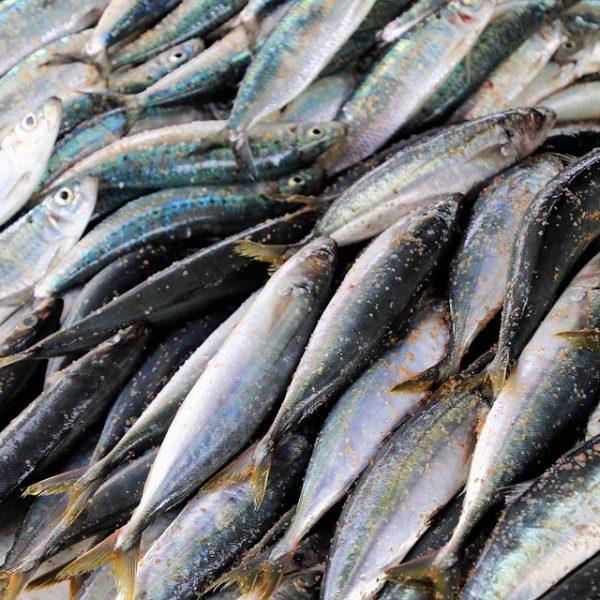 Venerdì Santo, cresce il consumo di pesce in Italia