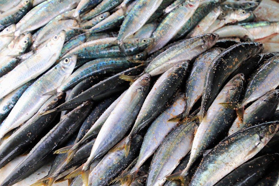 Specialità ittiche italiane, riconoscimento per 150 antiche ricette