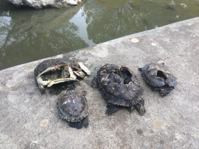 strage di tartarughe a carini