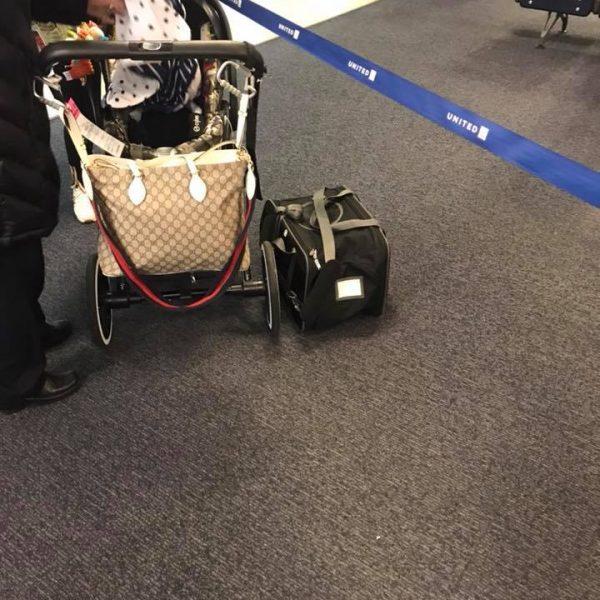 Usa, cucciolo di 10 mesi muore soffocato in aereo