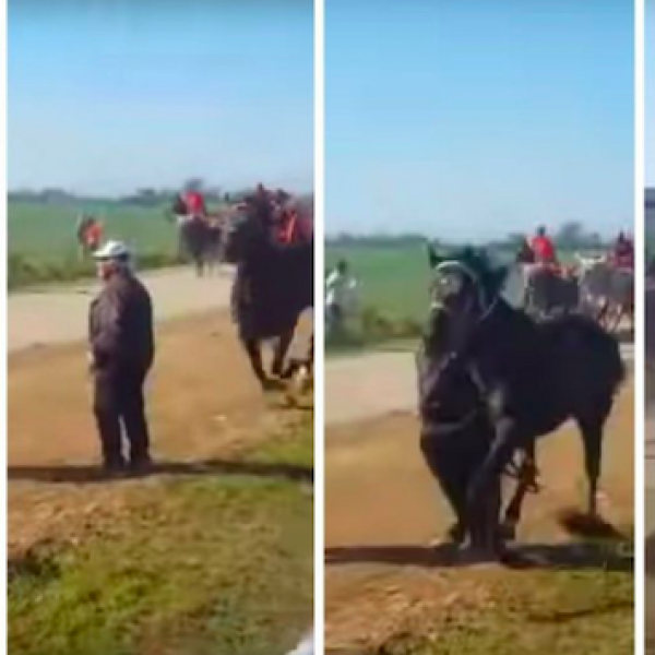 """""""Cavalcata dei buoi"""", un cavallo uccide uno spettatore"""