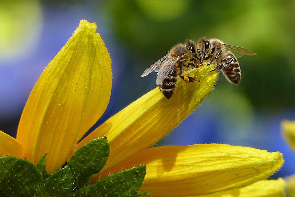 Al via la Giornata mondiale delle api per la salvaguardia della biodiversità