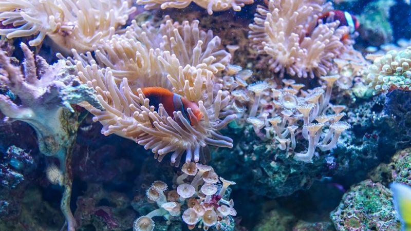 """Australia, """"La barriera corallina sta morendo"""""""