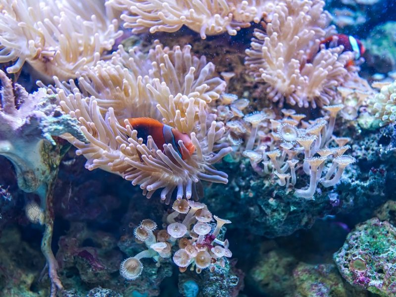 Ambiente, australia, Barriera corallina, la barriera corallina sta morendo, riscaldamento globale uccide barriera corallina, sbiancamento barriera corallina in australia, ridurre danni emissione di carbonio, innalzamento delle temperature letale per barriera corallina