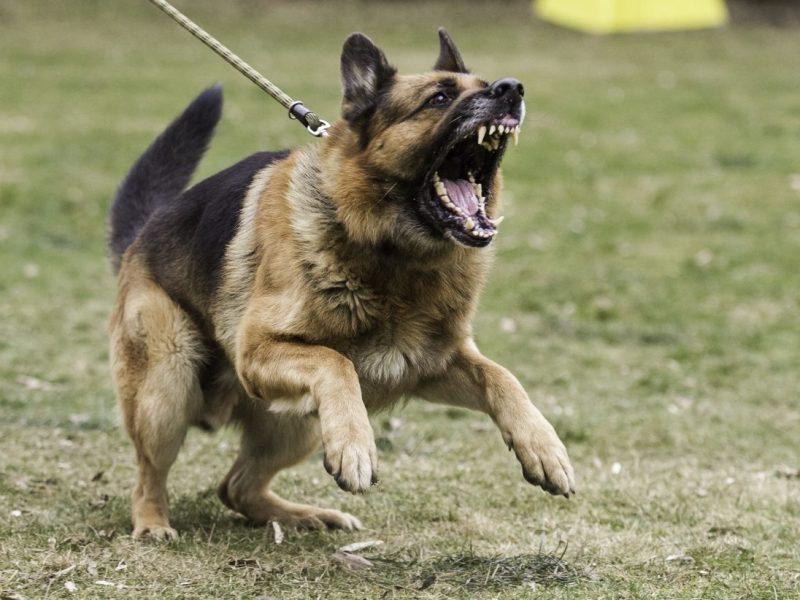educare i cani aggressivi