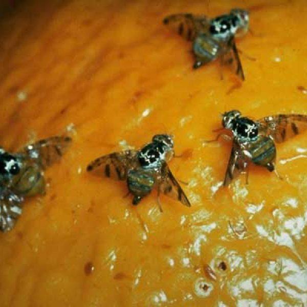 Commercio alimentare, nuove misure contro i parassiti