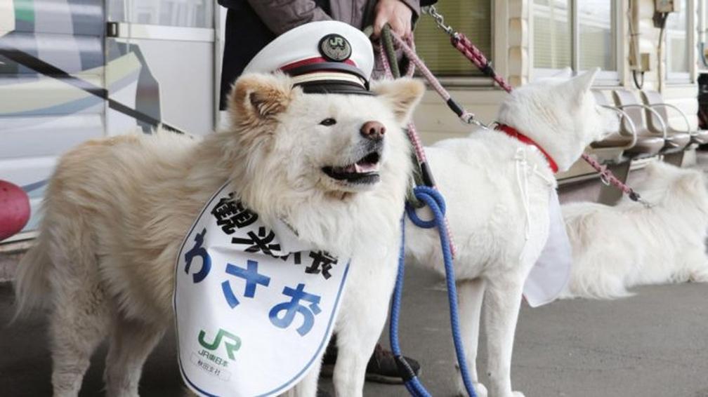 Giappone, un cane nominato capostazione