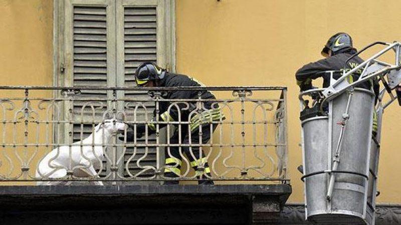 SOS cani abbandonati sul balcone, cosa fare?