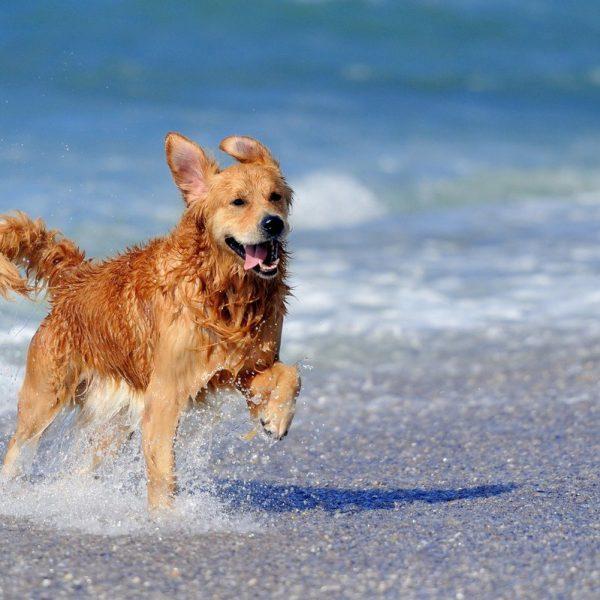 Cani in estate, consigli per gestire il cambio di stagione
