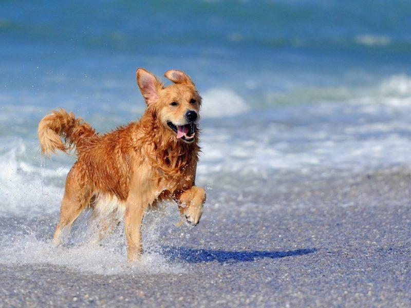 come bisogna comportarsi in spiaggia con il cane