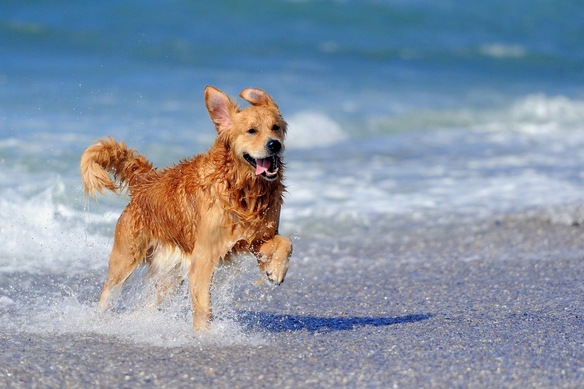 Ferragosto in spiaggia con gli amici a quattro zampe: le regole da seguire