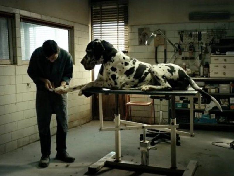 dogman scelto da anica per rappresentare l'italia agli oscar