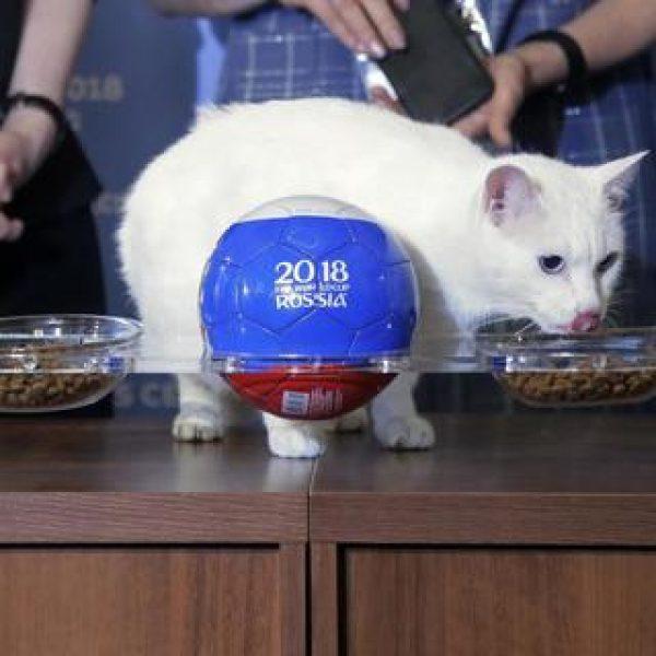 Russia 2018: il polpo Paul sostituito dal gatto Achille
