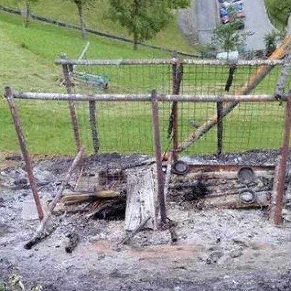 Caso cani bruciati vivi, AIDAA ipotizza pista mafiosa