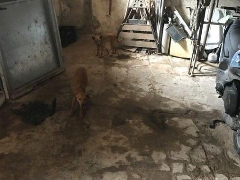 rinvenuto cane abusivo in centro storico a noto