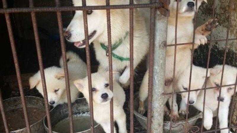 Stop Yulin 2018, l'appello di Tiziano Ferro