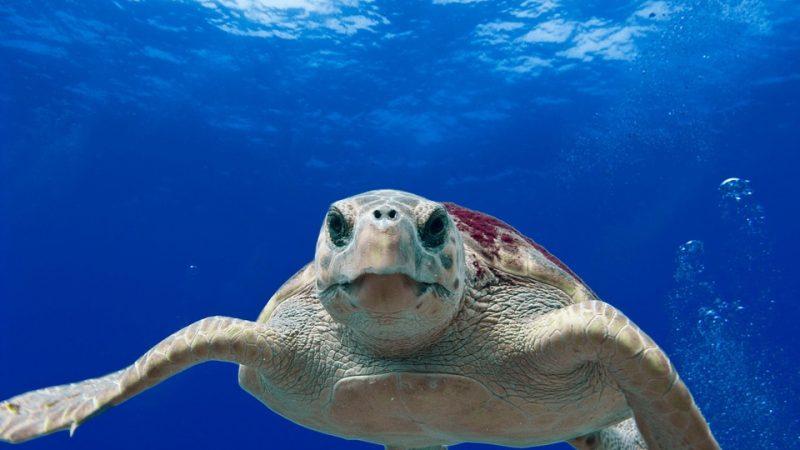 Emergenza plastica nel Mediterraneo, tartarughe in pericolo