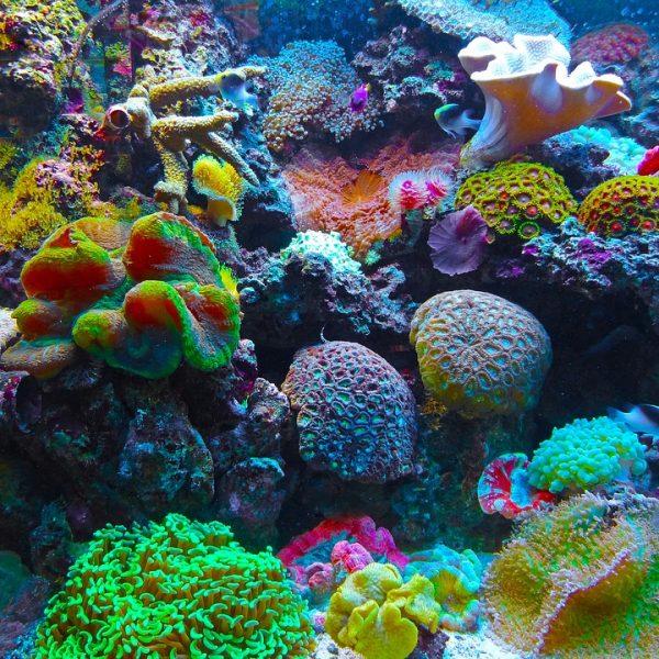 Mozambico, italiana dispersa in barriera corallina mozambico, uomo lancia raccolta fondi per ritrovare moglie dispersa in mare in mozambico