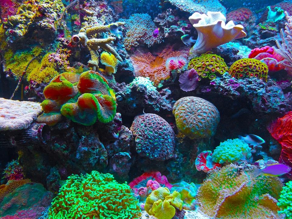 La barriera corallina del Belize è salva: lo ha stabilito l'Unesco