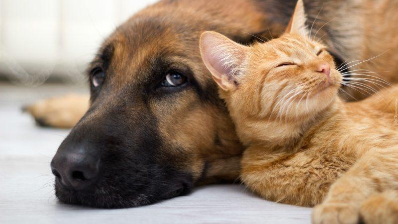 Inappetenza da caldo, come aiutare cani e gatti