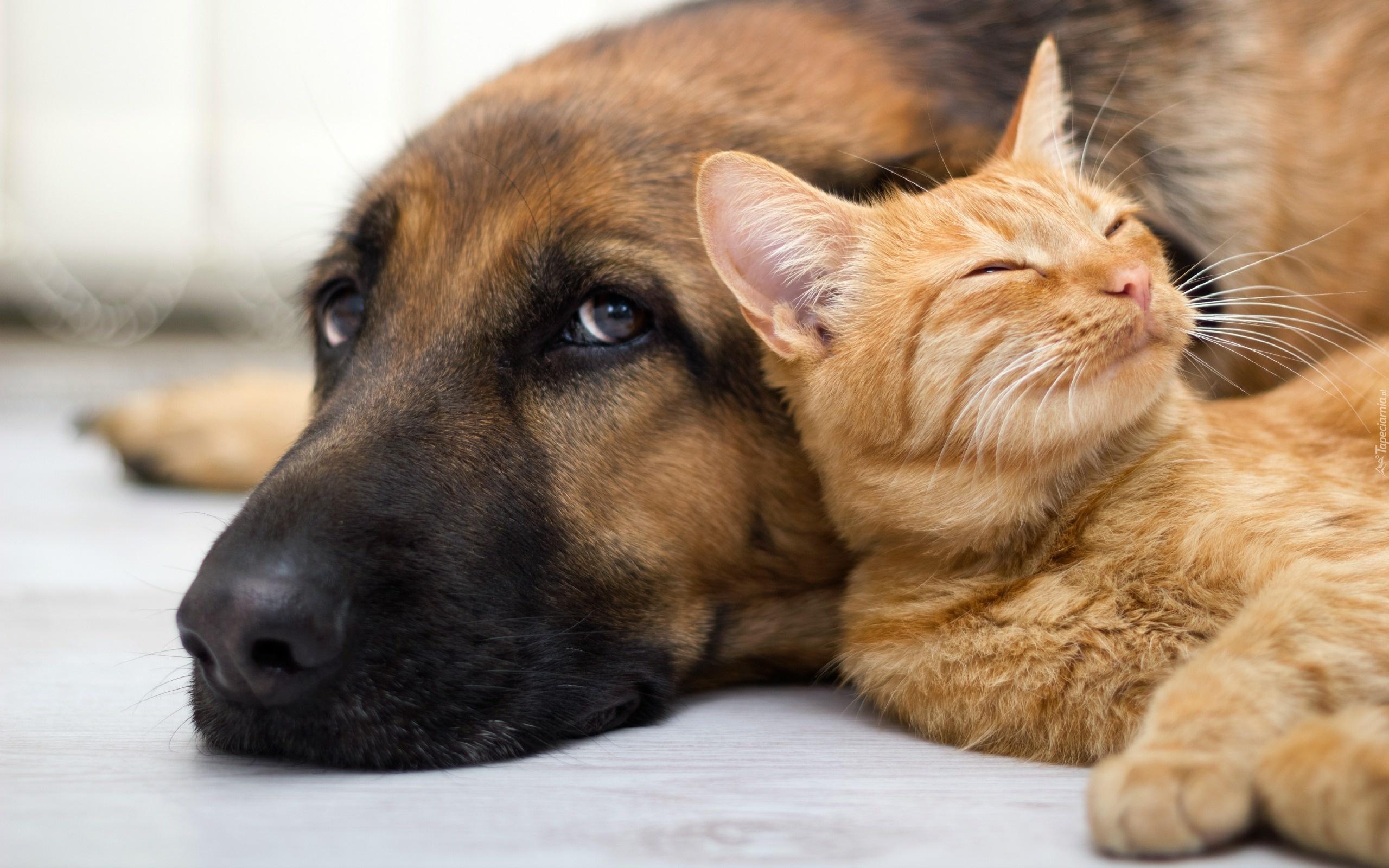 Cani e gatti, come proteggerli dagli incidenti domestici