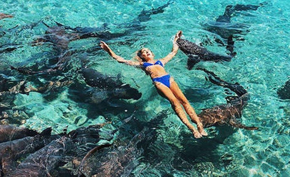 Bahamas, influencer morsa da uno squalo