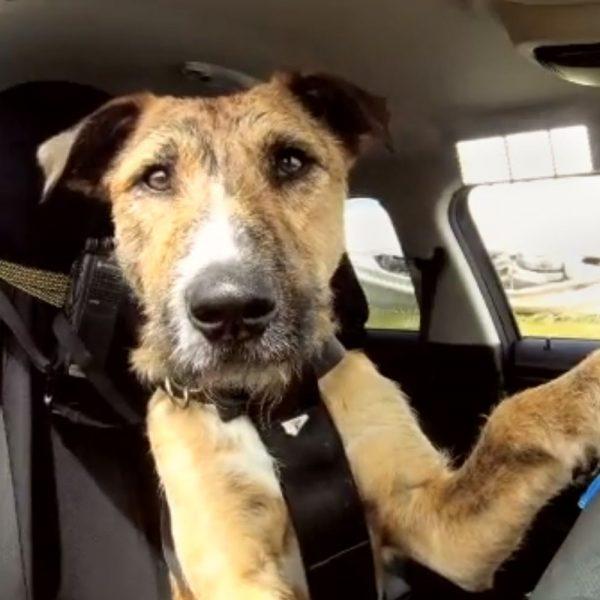 Cani e gatti in auto, come viaggiare sicuri