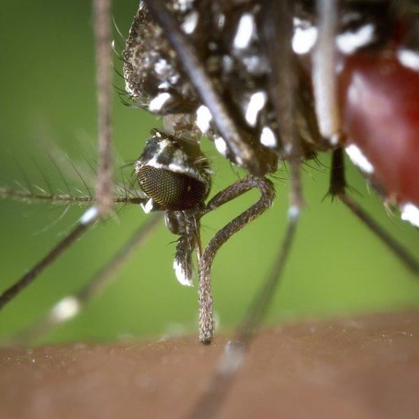 allerta zanzara tigre, allarme zanzara tigre in 67 province italiane, caldo piogge e zanzare tigre in tutta Italia, luglio 2018