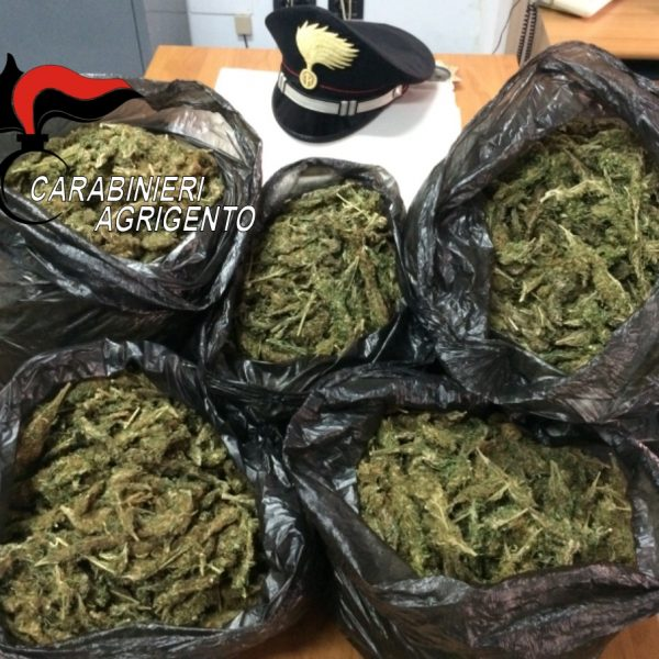 Agrigento, sequestrati 20 kg di marijuana nascosti tra l'uva