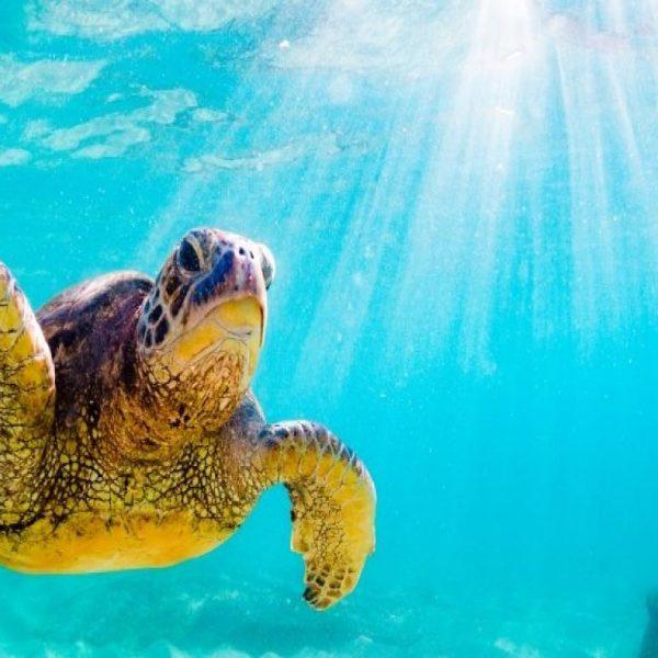 Ustica, due tartarughe dopo le cure tornano in mare