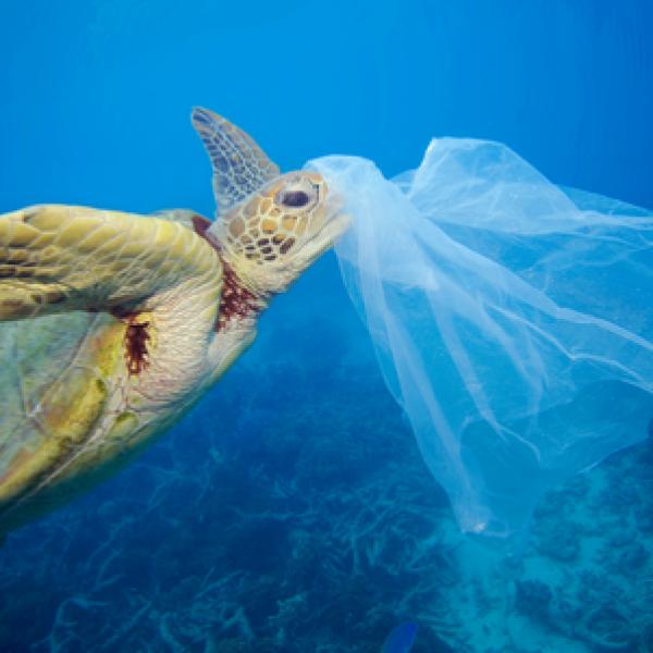 Plastica in mare, allarme WWF per animali in pericolo