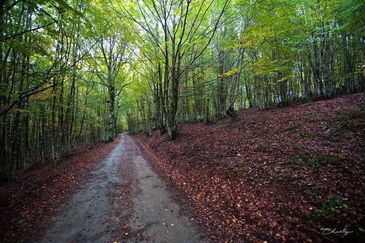 Sicilia: cinquanta milioni per proteggere i boschi siciliani
