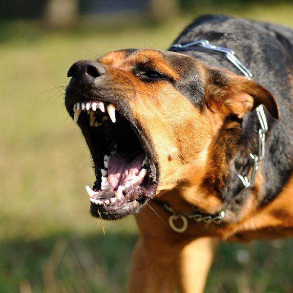 Cani a passeggio, le 8 regole per evitare un'aggressione