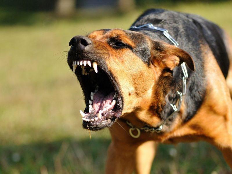 come proteggere il cane dall'attacco di un altro cane