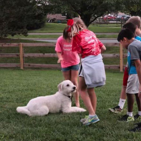 Dogs, su Netflix la docuserie sull'amore incondizionato dei cani