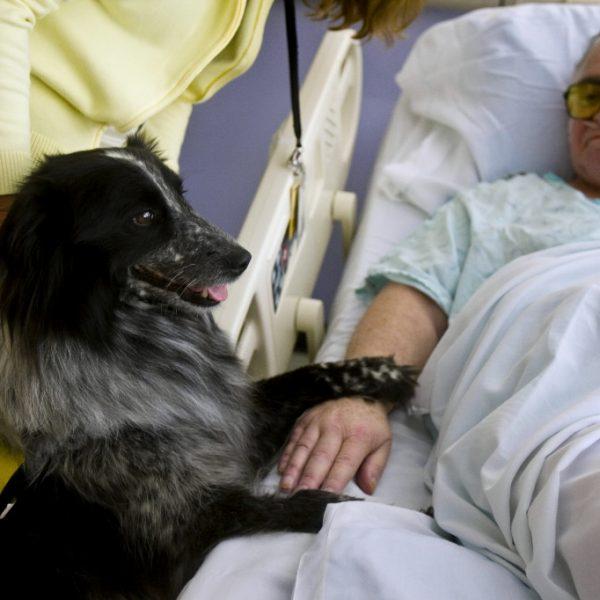 Umbria, attivata la pet therapy negli ospedali