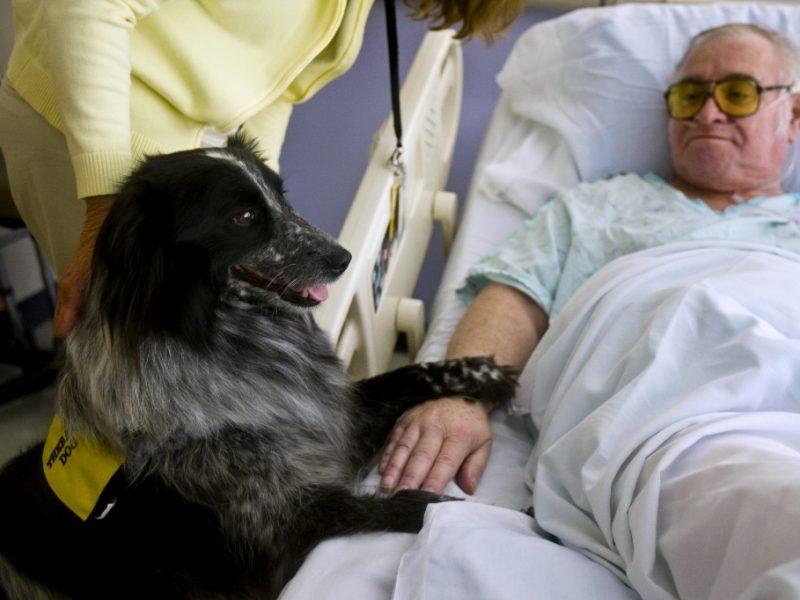 in umbria gli animali di affezione potranno entrare gli ospedali