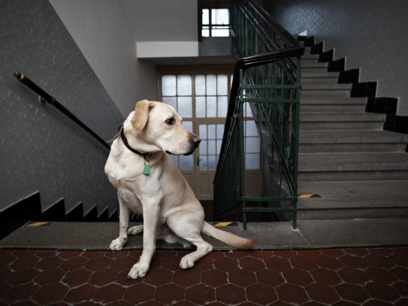 scompare il divieto di tenere animali in casa