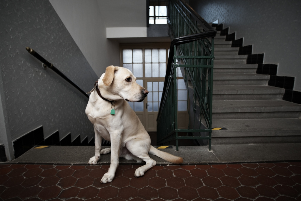 Animali in casa, le regole da osservare in condominio