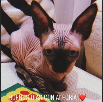 CR7, la famiglia si allarga con un gatto da 2mila euro