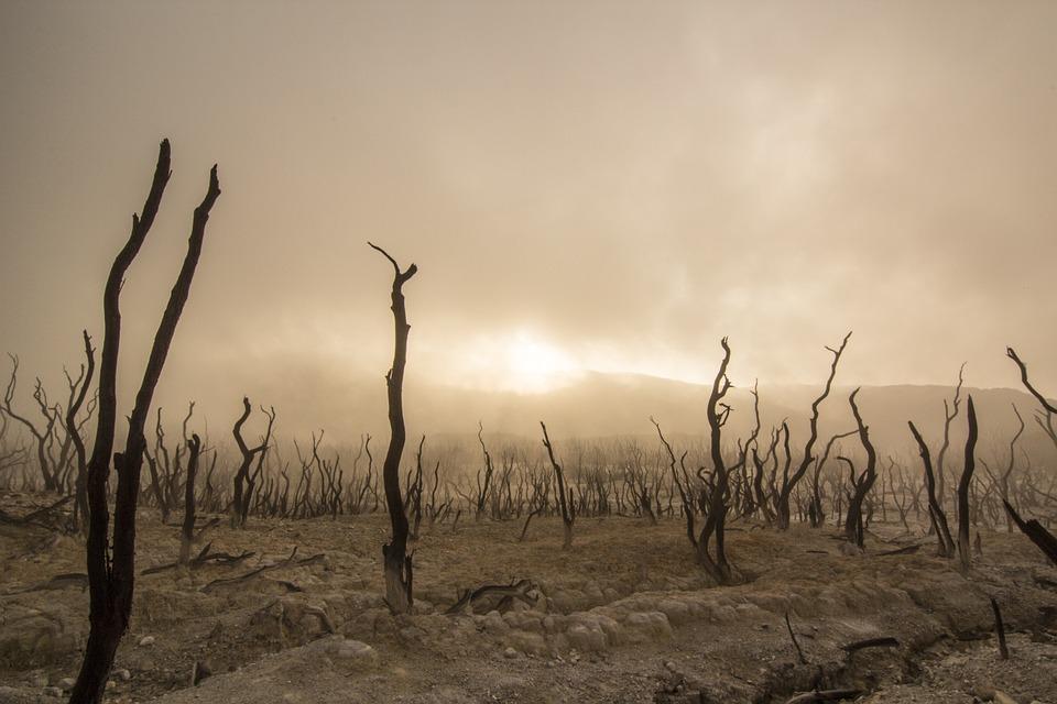 """Clima, Iss: """"Abbiamo solo 20 anni per salvare la Terra"""""""
