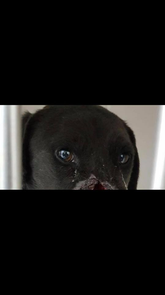 Campobasso, una nuova speranza per Peppe il cane mutilato