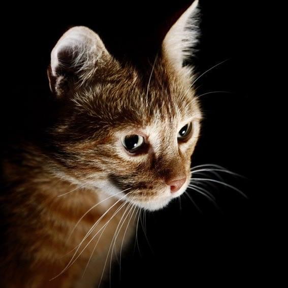 """Oroscopo degli animali, """"parla"""" il gatto Michele"""