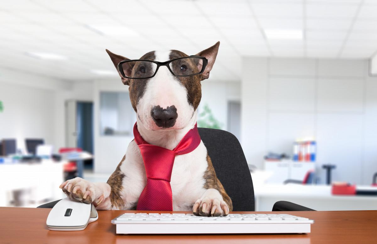 Milano, nella sede Unicredit libero accesso ai cani