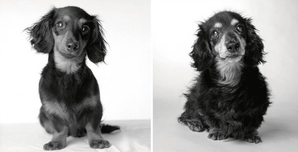 Come invecchiano i cani? Il tenero reportage di Amanda Jones