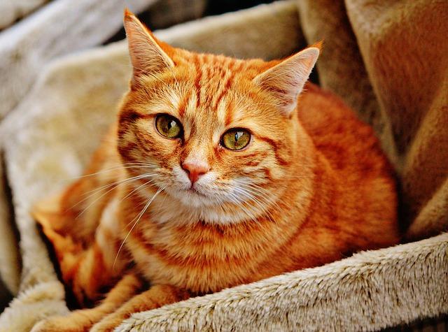 Giornata nazionale del Gatto, 5 motivi per vivere con un felino