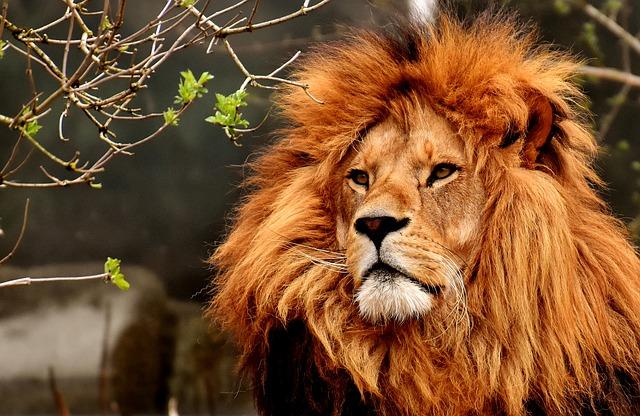 Sudafrica, è boom per il turismo ecosostenibile